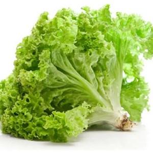 Daun Salad (1pack)