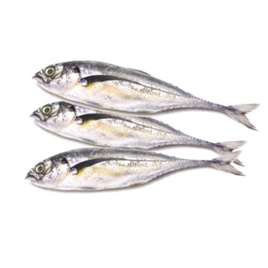 Ikan Cencaru (Ikan Jacket)