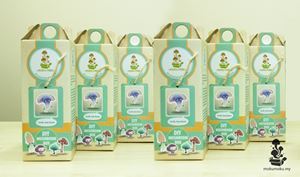 6 Pack Combo Moku-moku DIY Mushroom Box