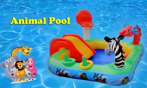 Animal Swimming Pool
