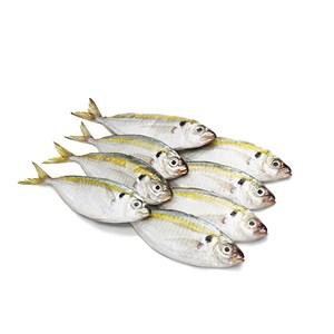 Ikan Selar Kuning