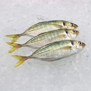 Ikan Selar